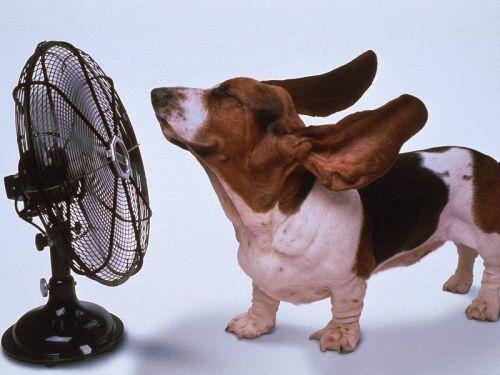 Un ventilatore fai da te. Consigli pratici